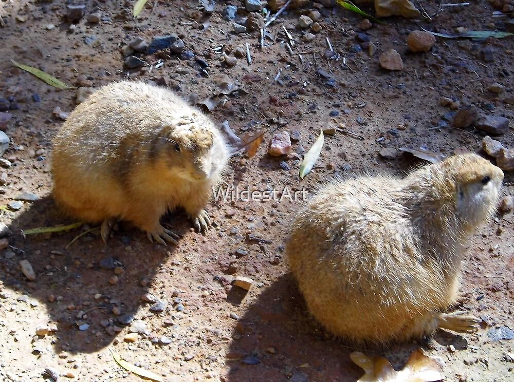 Two Prairie Dogs Sunning by WildestArt