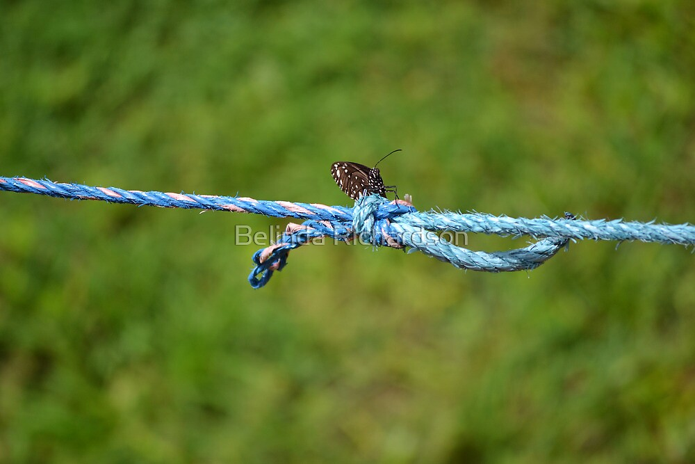 Blue Rope Butterfly I by Belinda Richardson