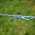 Blue Rope Butterfly I by Belinda Richardson