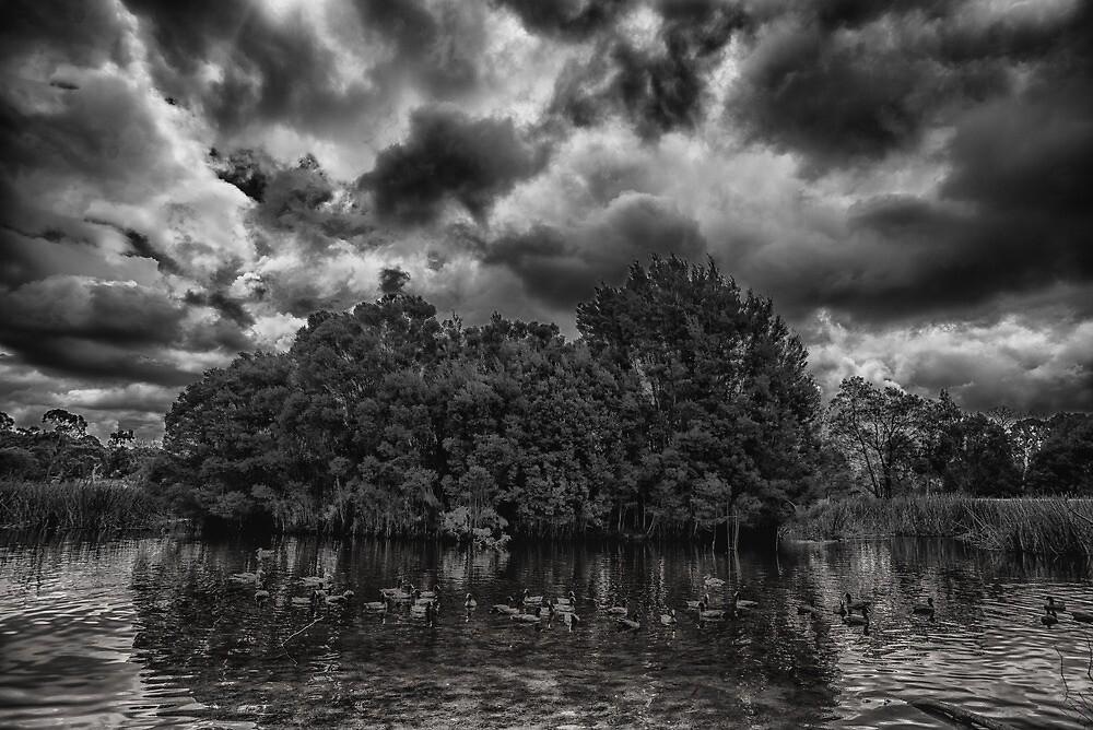 Stormy wetlands by Jane McLoughlin