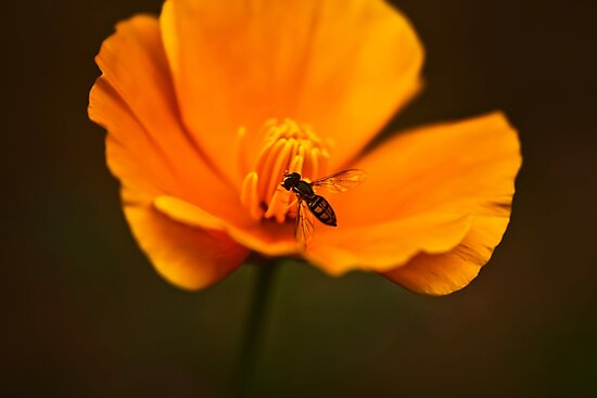 Flower and The Bee by Gopuraj Soundrarajan