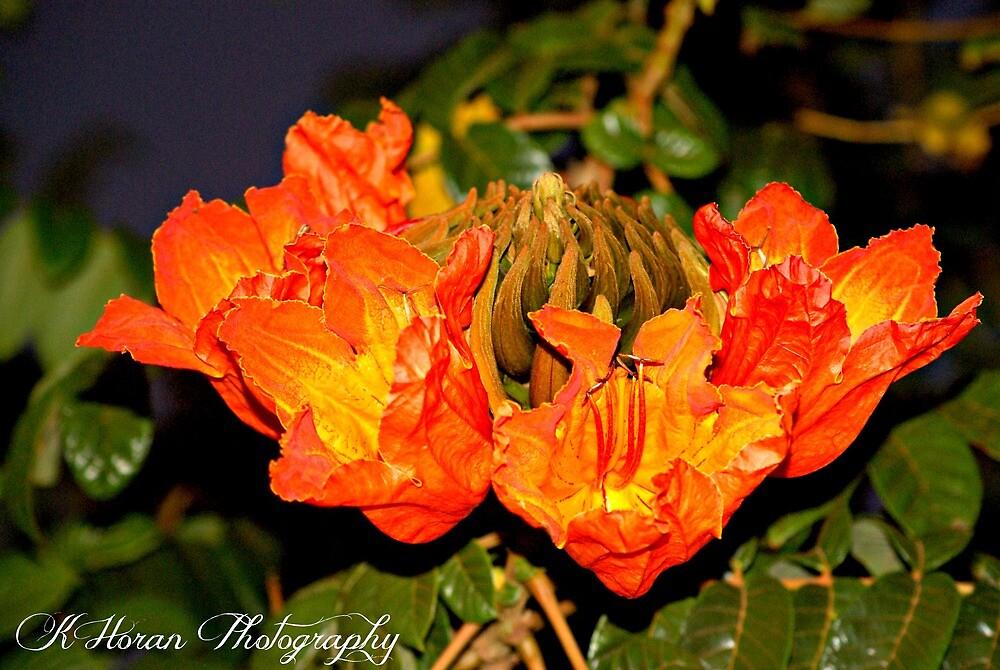 Orange Beauty by Kate0011