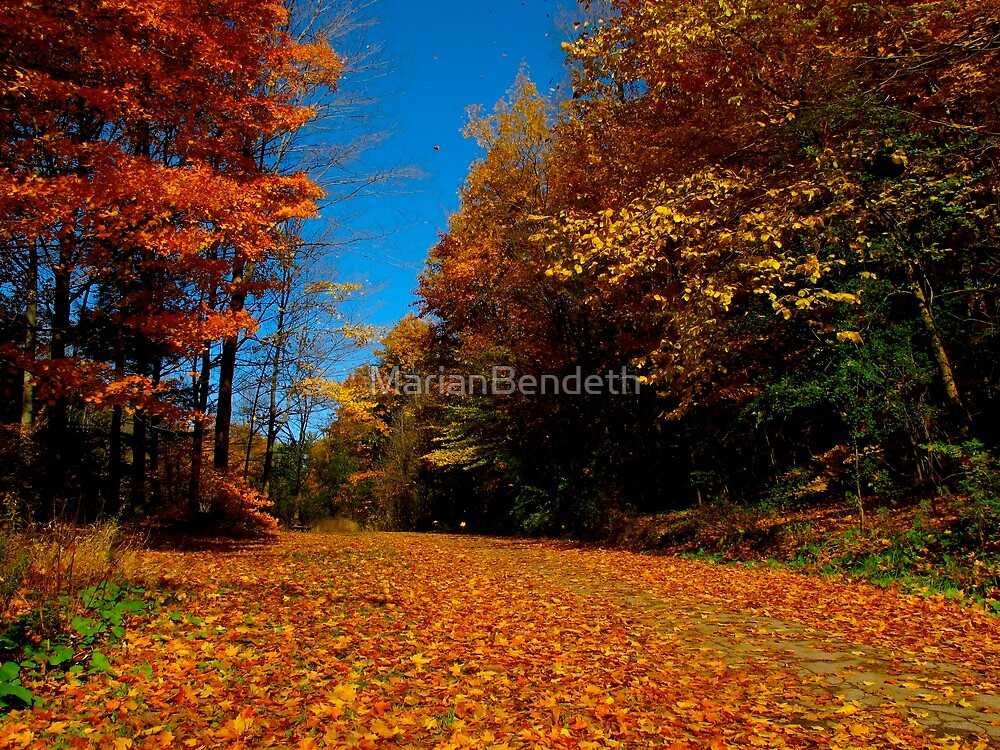 Falling leaves by MarianBendeth
