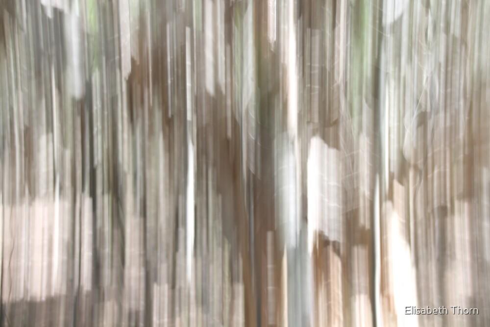 Paperbark Impression 2. by Elisabeth Thorn