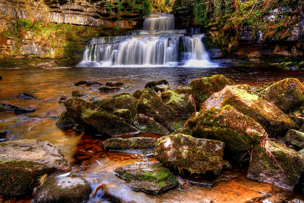 Cotter Force by Stephen Smith