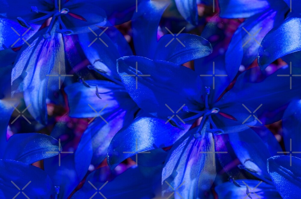 Blue Lilies by Artisimo