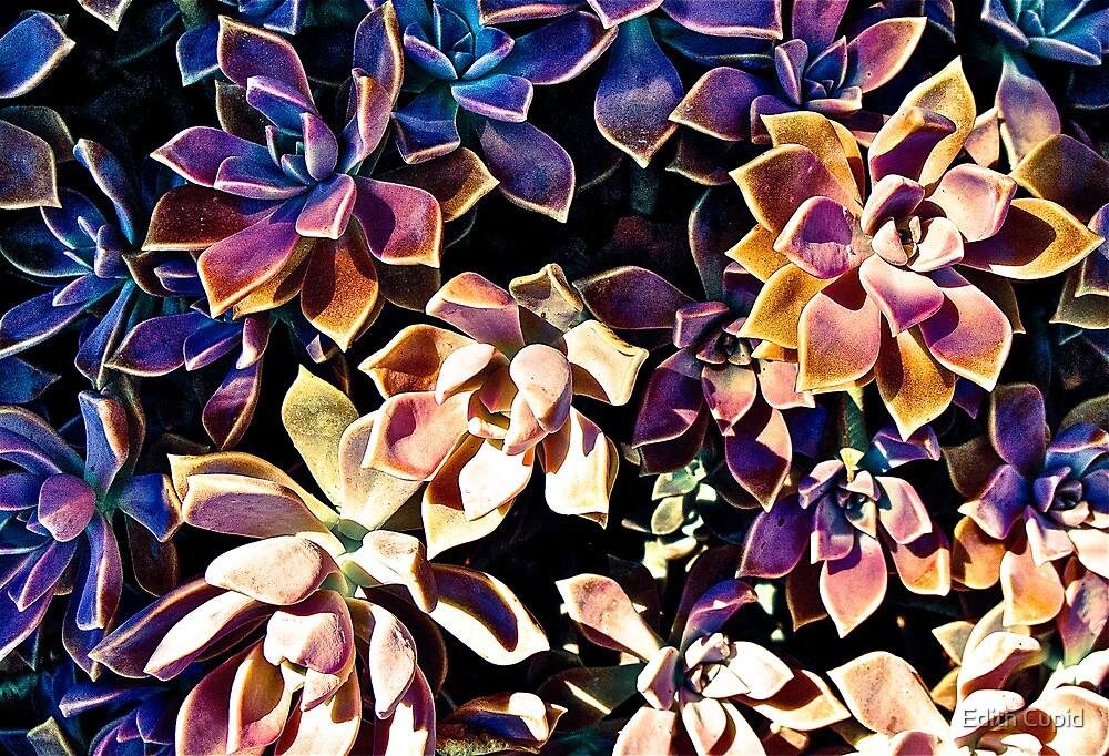 COLOURFUL COMPOSITIONS OF FLOWERS!!! Flowers by Beatrice Cupido