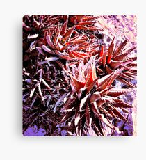 IF YOU SIT ON THESE CACTUS WILL BE NOT FUN!!!! Flowers Canvas Print