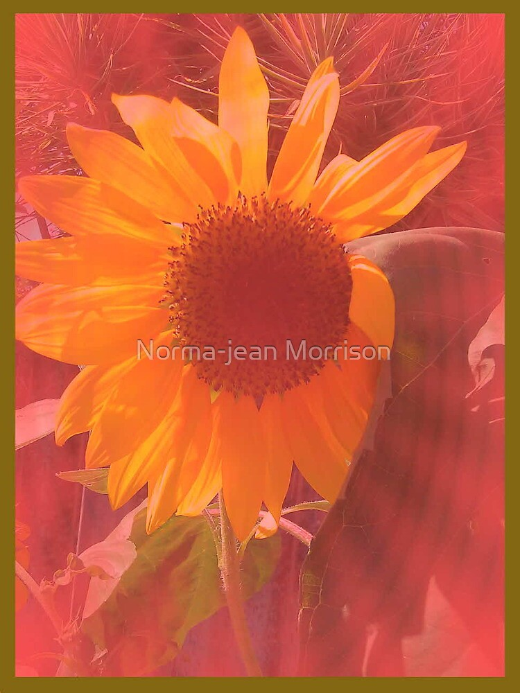 """"""" LET THE LIGHT SHINE"""" by Norma-jean Morrison"""