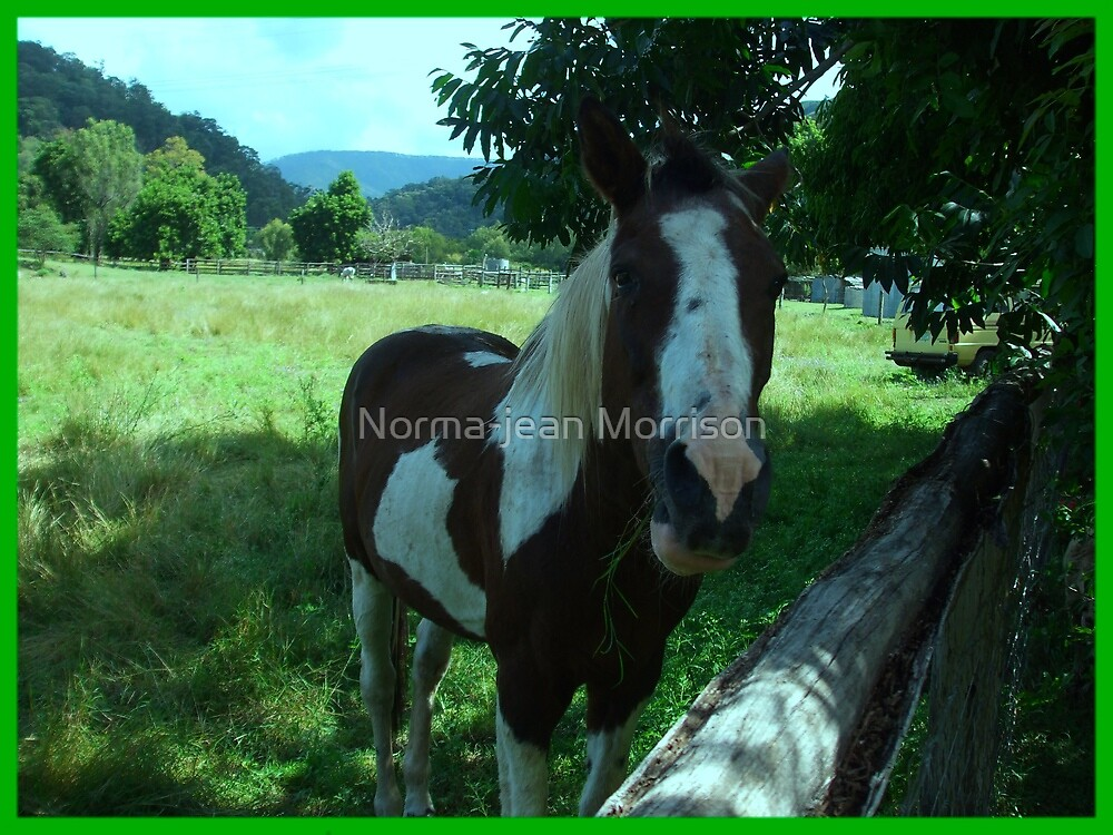 """""""My horse"""" by Norma-jean Morrison"""