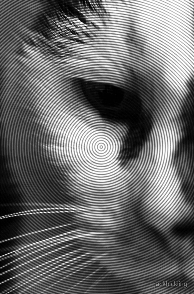 Black and White Cat by jackhickling