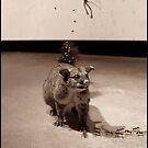 playin possum by twistwashere
