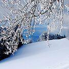 Snowy Branches by Imi Koetz