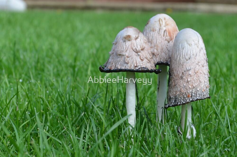 Mushrooms by AbbieeHarveyy