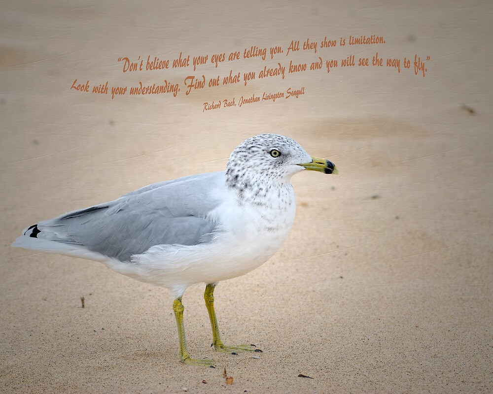Seagull Says by Roger  Swieringa