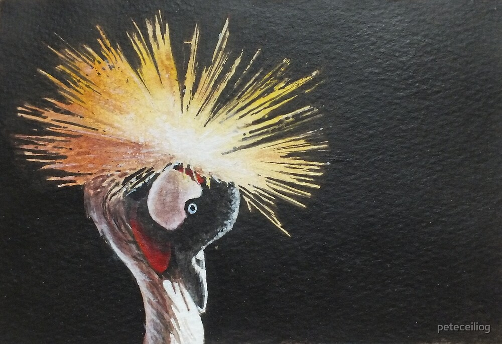 Crested Crane by peteceiliog