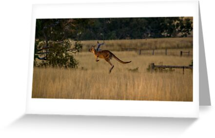 kangaroo on the move by John Ugrenovic