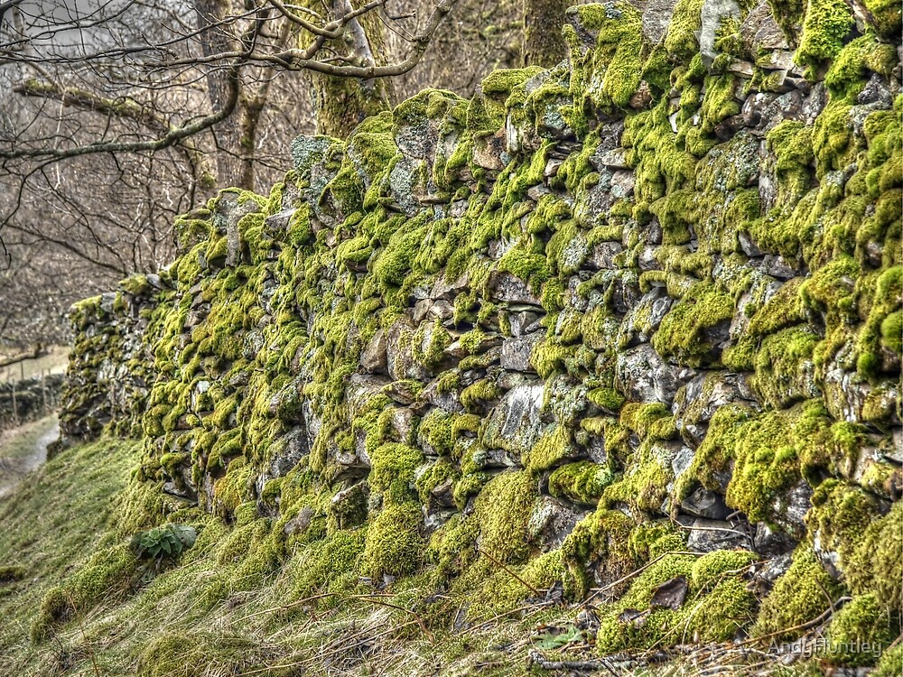 Moss on a dry stone wall by AndyHuntley