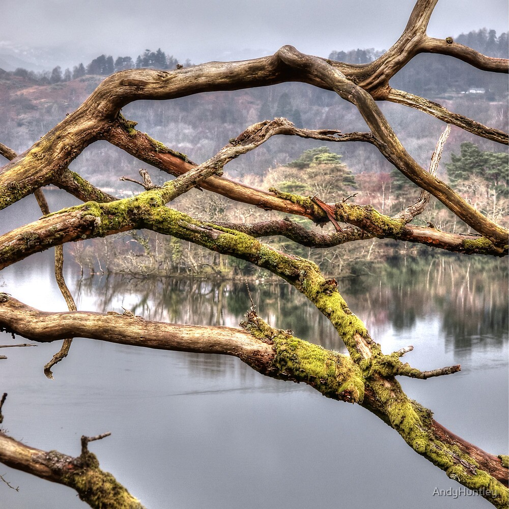 Branches over a lake by AndyHuntley