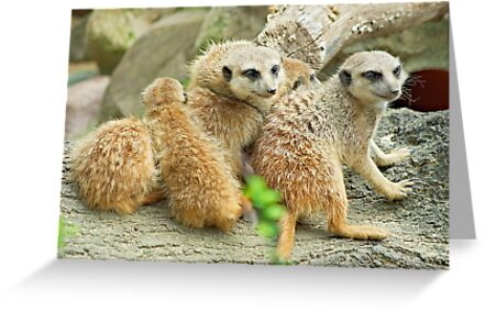 Meerkat Family by Galind