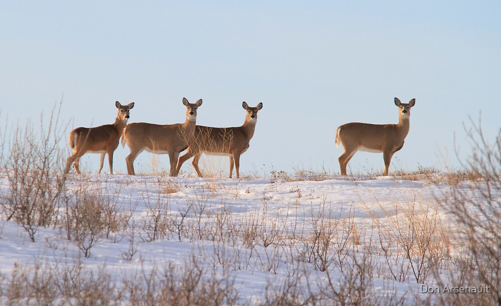 A Lot of Doe by Don Arsenault
