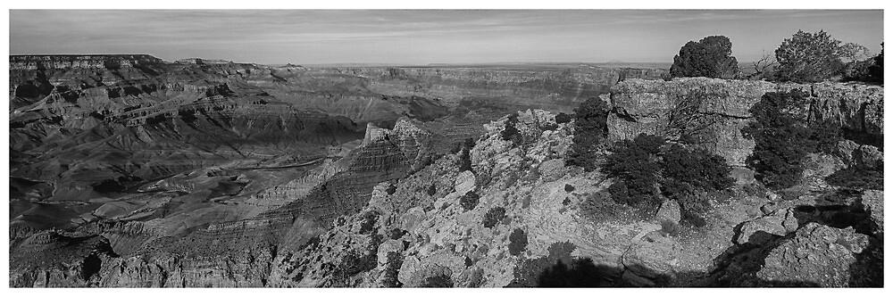 Grand Canyon National Park #1 - Arizona USA by Edith Reynolds