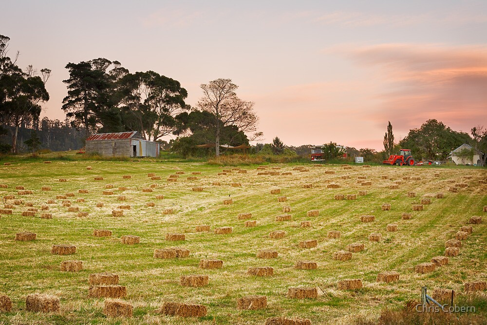 Hay Bales at Cygnet, Tasmania by Chris Cobern