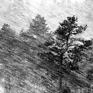 1.2.2014: Blizzard by Petri Volanen