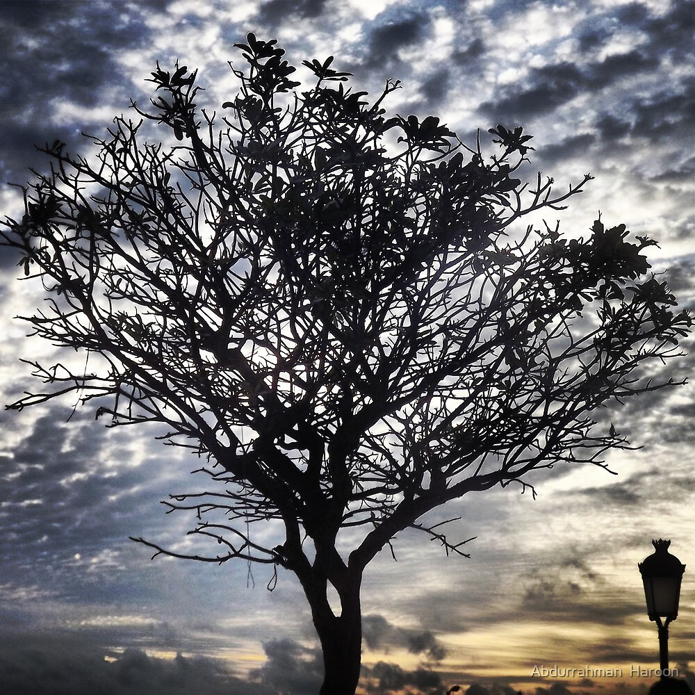 Tree with clouds and Sunset by Abdurrahman  Haroon