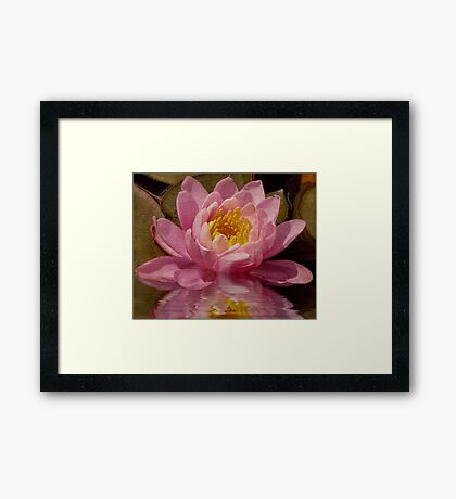 Pink Water Lily Dreams Framed Print