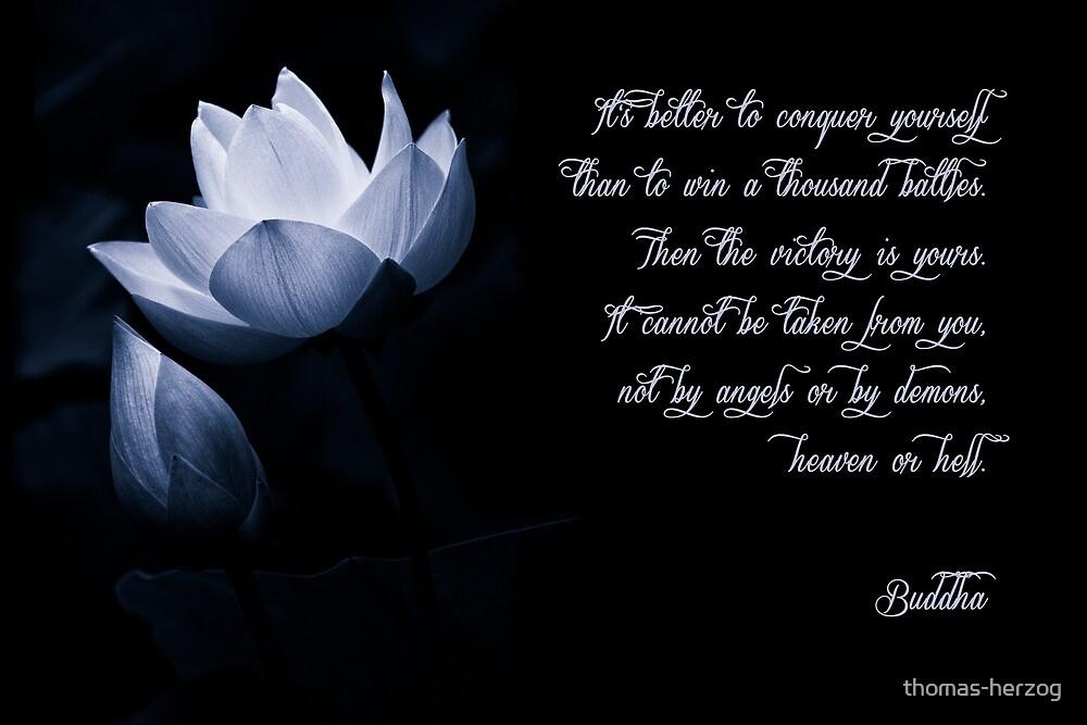 I T ' S . B E T T E R . . . by thomas-herzog