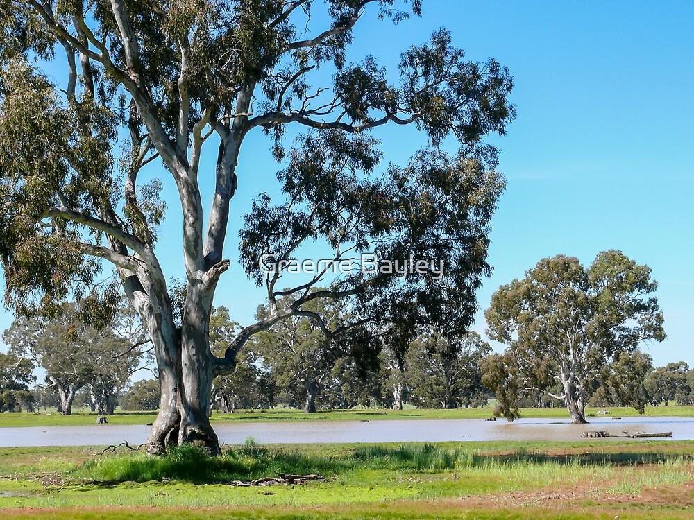 Australia Landscape after Good Rain by Graeme Bayley