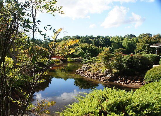 Japanese Gardens, Toowoomba by Therese Alcorn