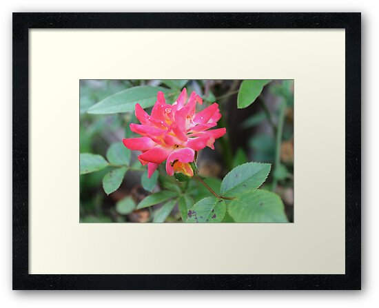 Flora 2 by Bruce Northcott