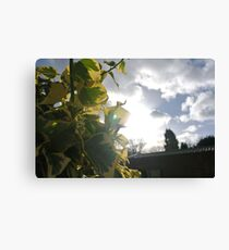 Sunlight so bright Canvas Print