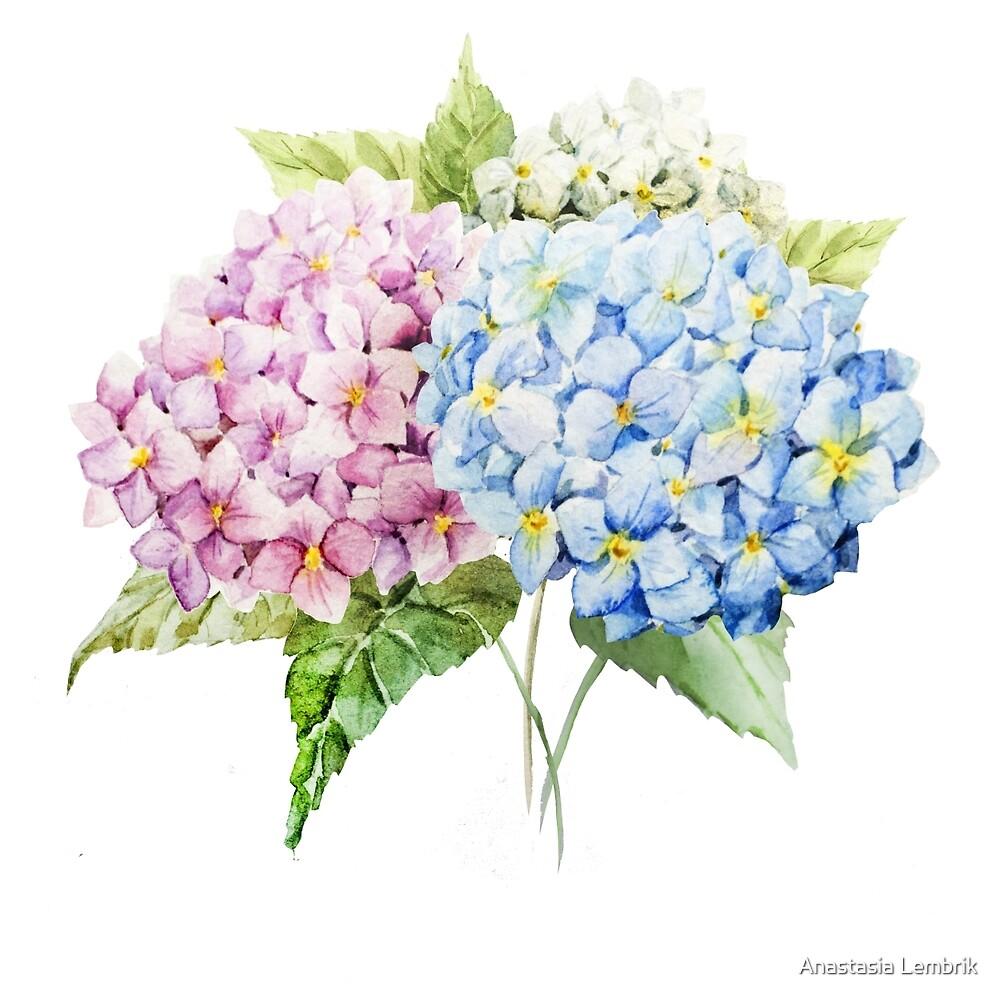 watercolor bouquet of hydrangea flowers by Anastasia Lembrik