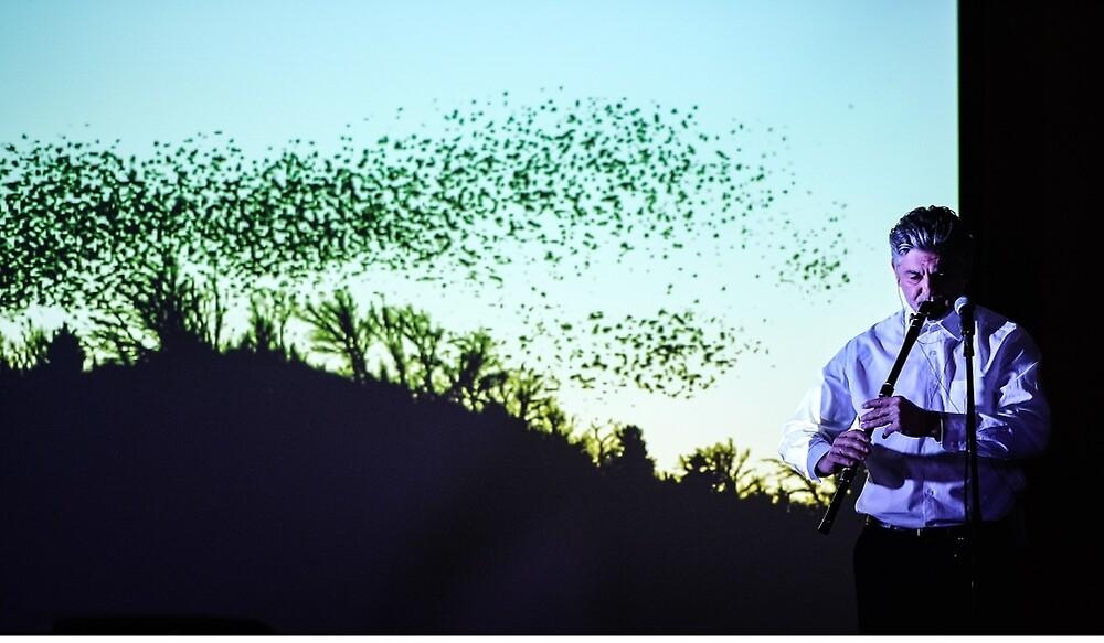 Цвърчат рояци палави врабчета.. by Nikolay  Dimitrov