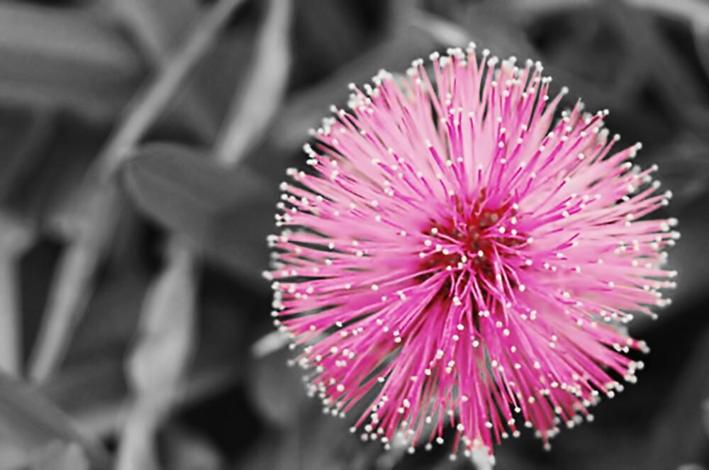 Pink Sparkler by Emily Rose