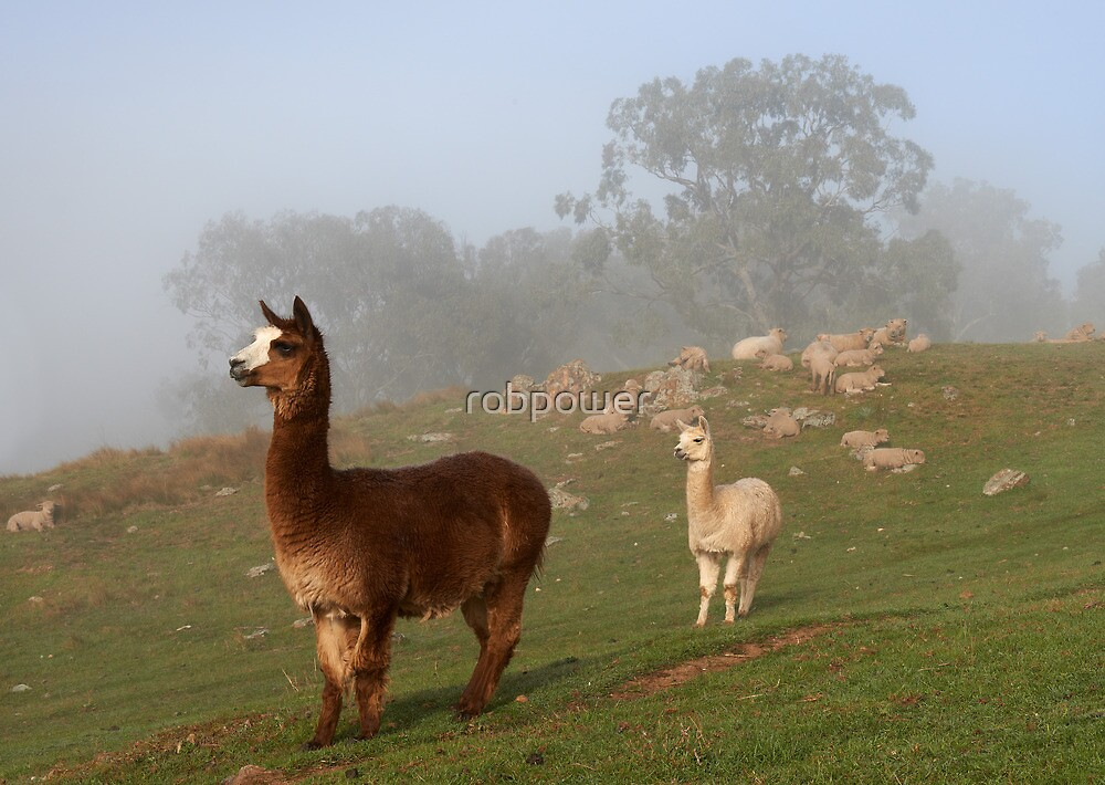 Alpacas on Guard by robpower