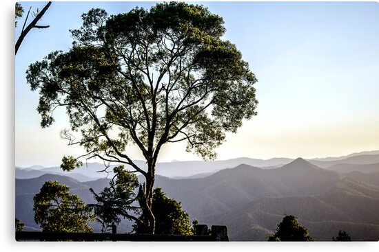 Tree on a Mountain Top by Clare Colins