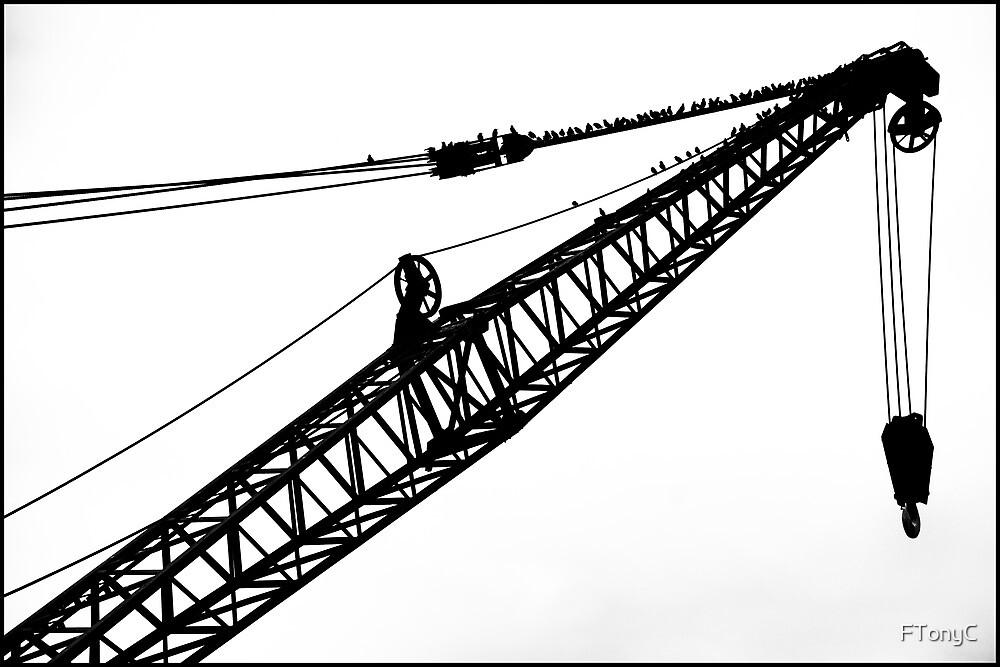 Crane & Starlings by FTonyC