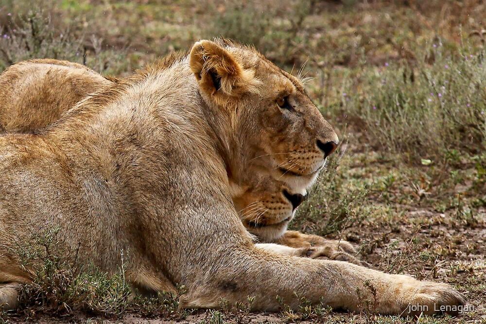 Strategising before dinner   -  Southern Serengeti Tanzania by john  Lenagan