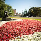Adelaide parklands no. 2 by samg