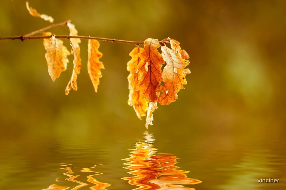 reflection by vinciber