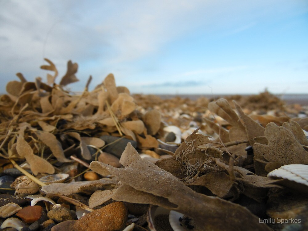 Sea weeds by Emily Sparkes