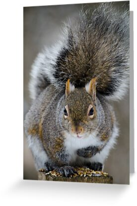 Close up of a squirrel by awcreations765