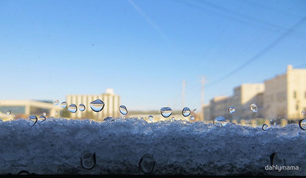 Winter Windowsill by Shawna Rowe