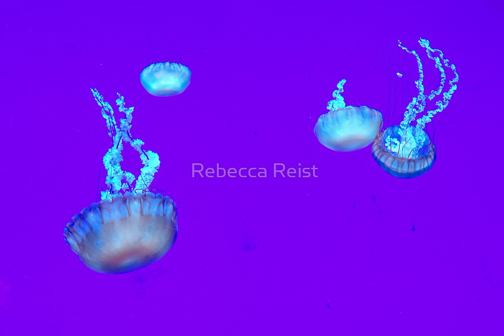 Free Floating by Rebecca Reist
