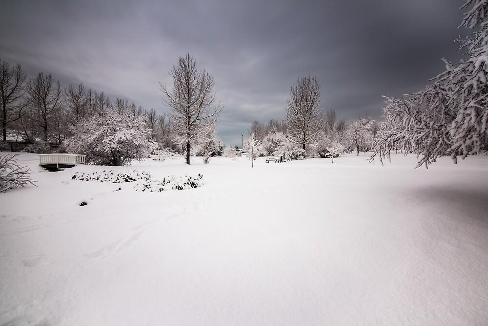 white trees by JorunnSjofn Gudlaugsdottir