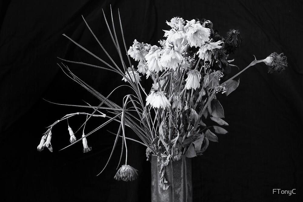 Faded Flowers by FTonyC